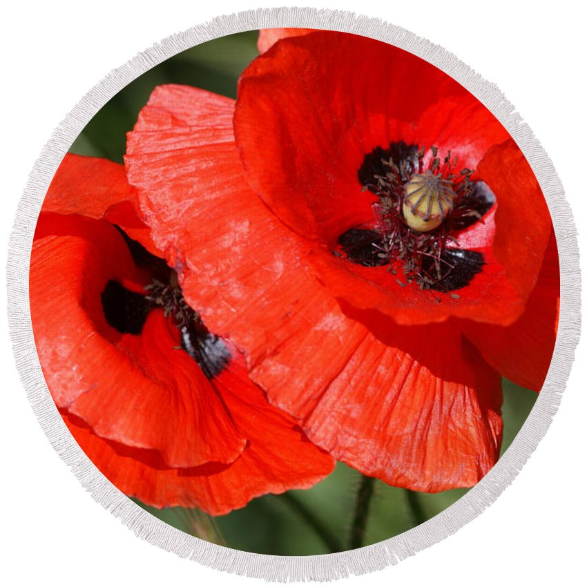 Poppies Round Beach Towel featuring the photograph Beautiful Poppies 2 by Carol Lynch