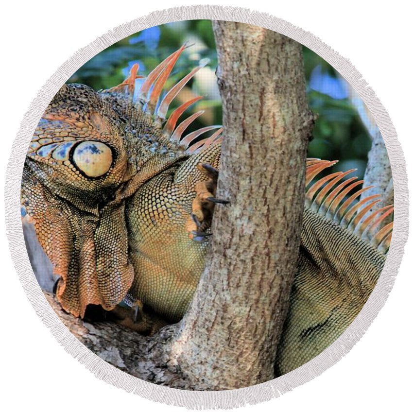 Iguana Round Beach Towel featuring the photograph Blending In by Adam Jewell