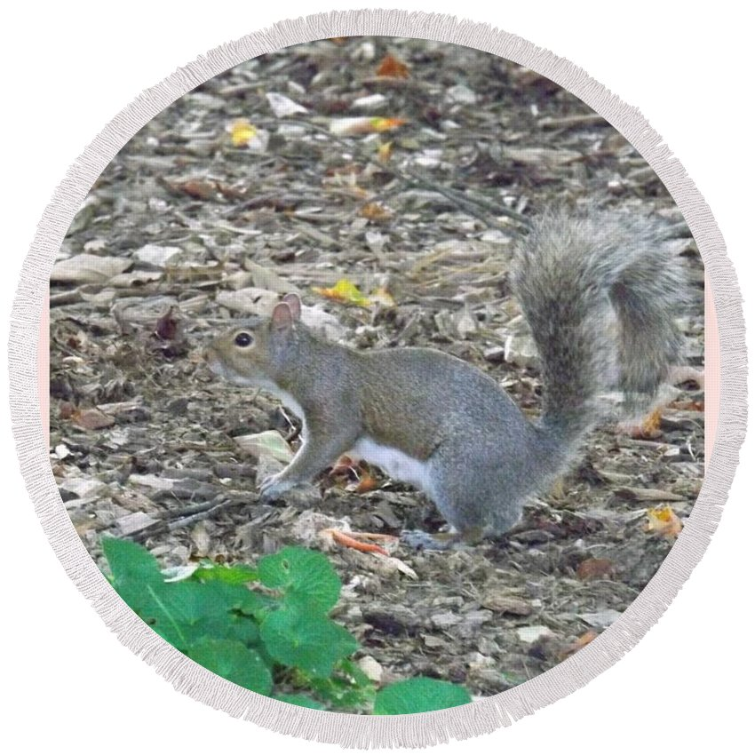 Rodent Round Beach Towel featuring the photograph Blending In by Sara Raber