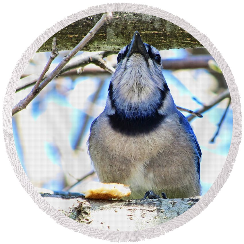 Nature Round Beach Towel featuring the photograph Blue Jay With Bread by Debbie Portwood