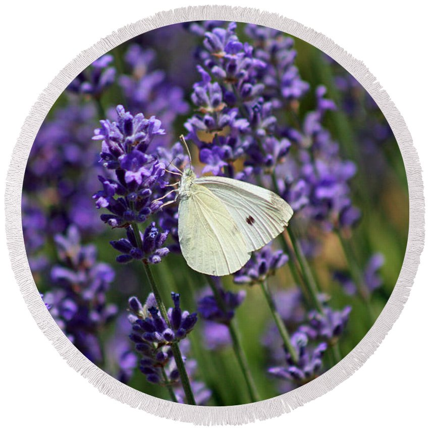 Butterfly Round Beach Towel featuring the photograph Cabbage White Butterfly by Karen Adams