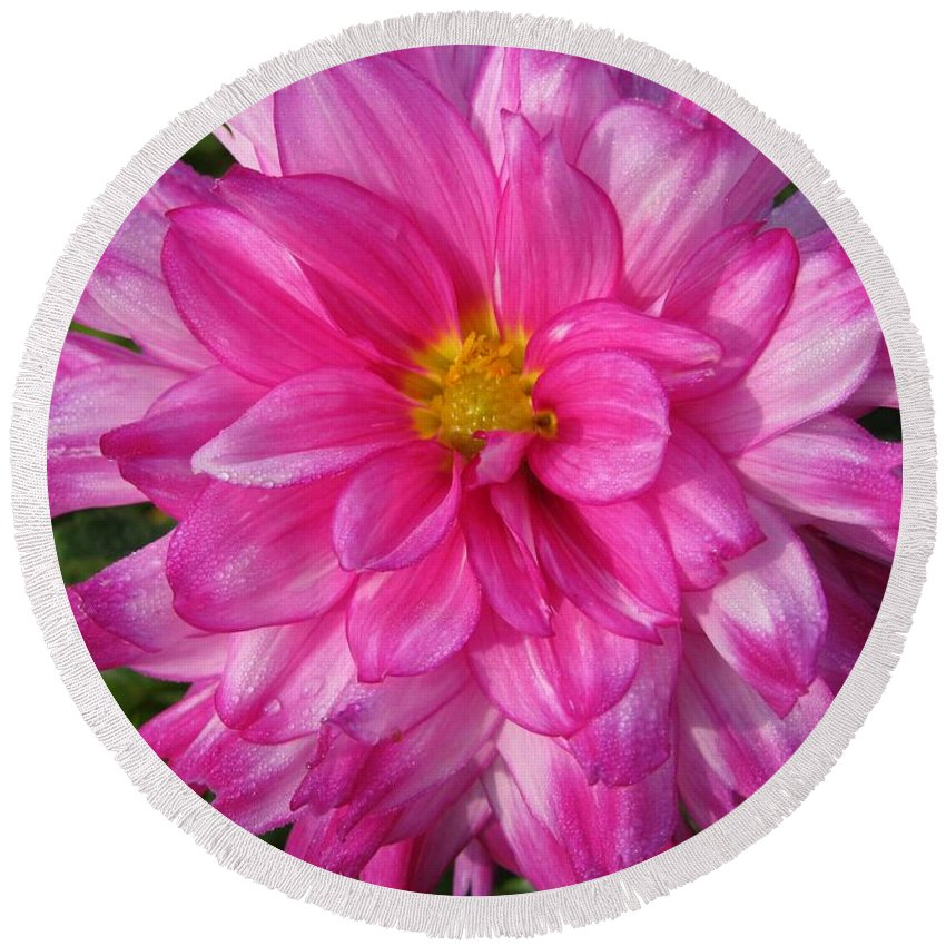 Dahlia Round Beach Towel featuring the photograph Dahlia Named Who Dun It by J McCombie