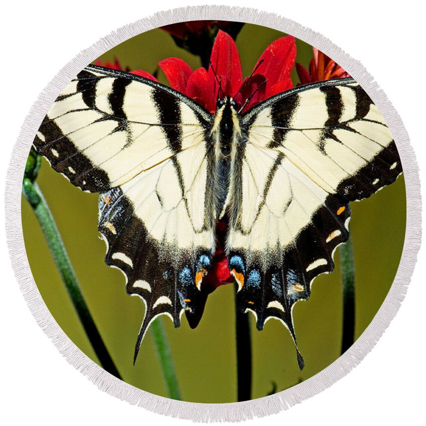 Eastern Tiger Swallowtail Butterfly Round Beach Towel featuring the photograph Eastern Tiger Swallowtail Butterfly by Millard H. Sharp