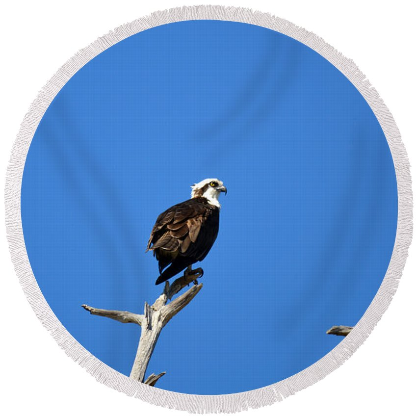 Osprey Round Beach Towel featuring the photograph High Up by Linda Kerkau
