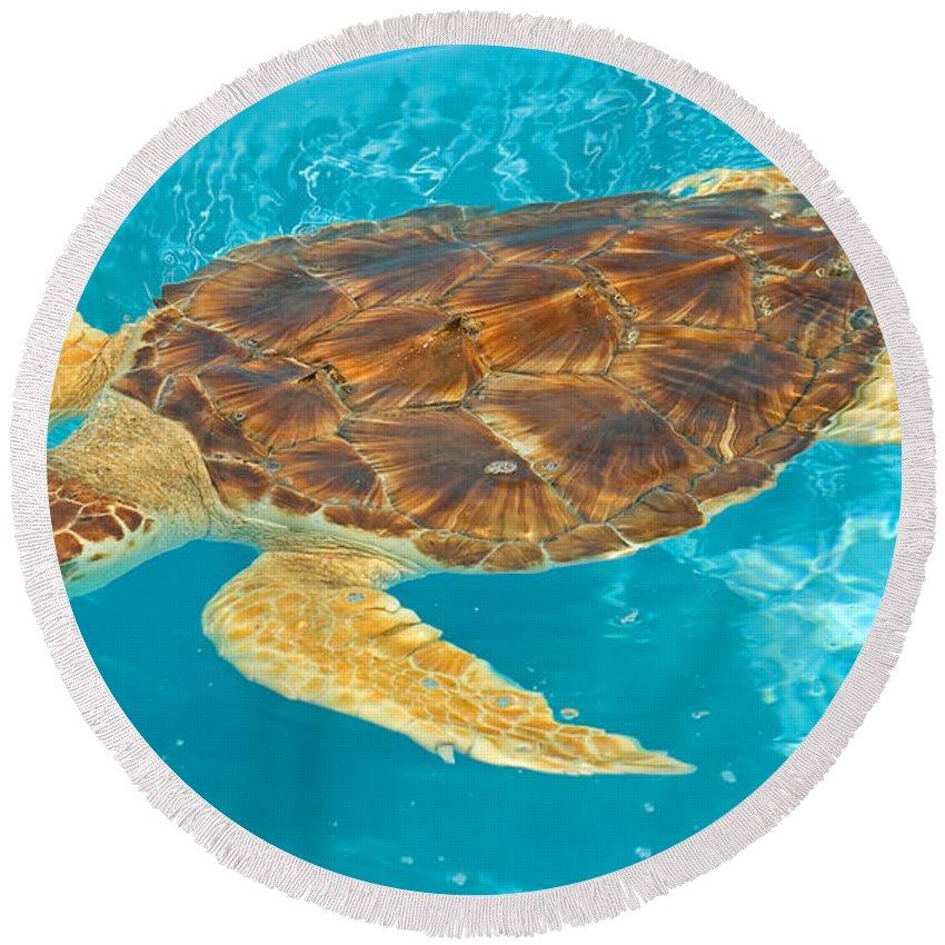 Cheloniidae Round Beach Towel featuring the photograph Loggerhead Sea Turtle by Millard H. Sharp