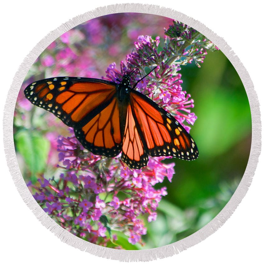 Butterfly Round Beach Towel featuring the photograph Monarch Butterfly by Mark Dodd