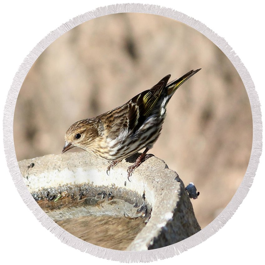 Pine Round Beach Towel featuring the photograph Pine Siskin by Lori Tordsen