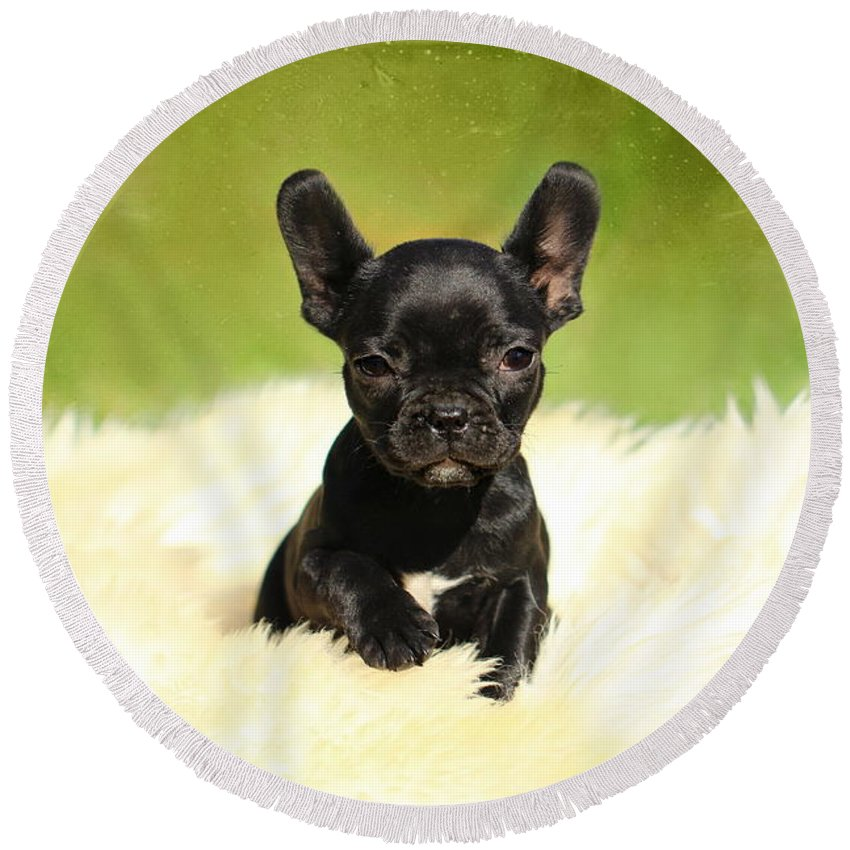 French Bulldogs Round Beach Towel featuring the photograph Puppies by Heike Hultsch