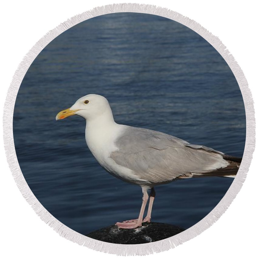 Seagull Round Beach Towel featuring the photograph Seagull by FL collection