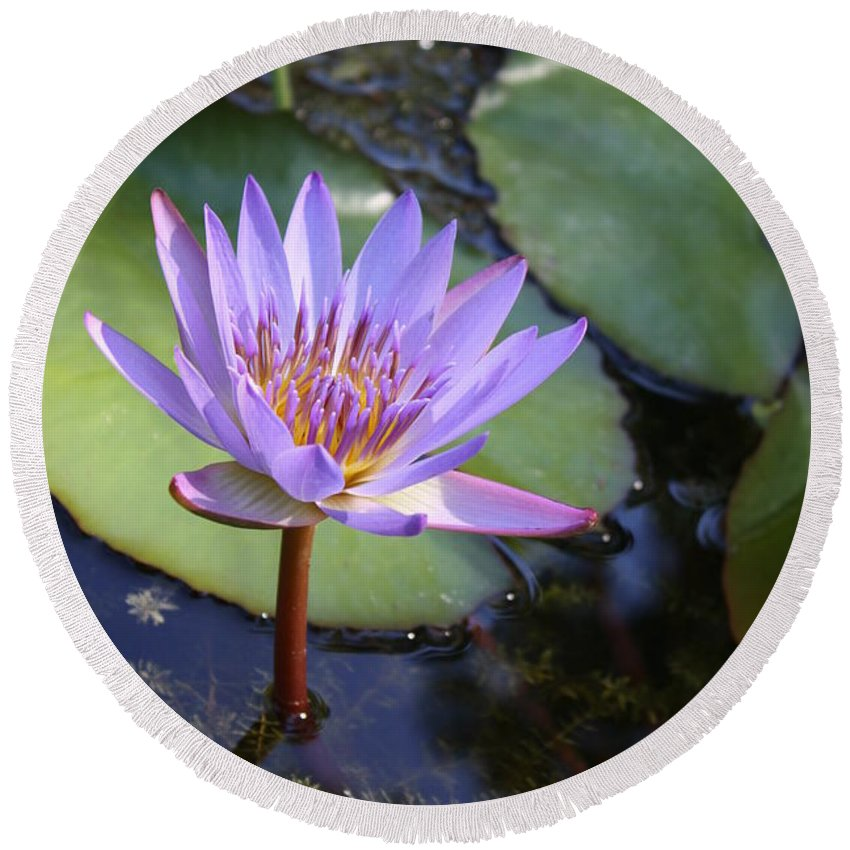 Purple Round Beach Towel featuring the photograph Blue Water Lily by Irina Davis