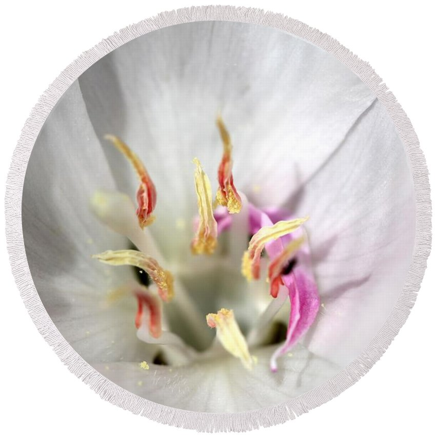 Mccombie Round Beach Towel featuring the photograph White Godetia From The Satin Mix by J McCombie