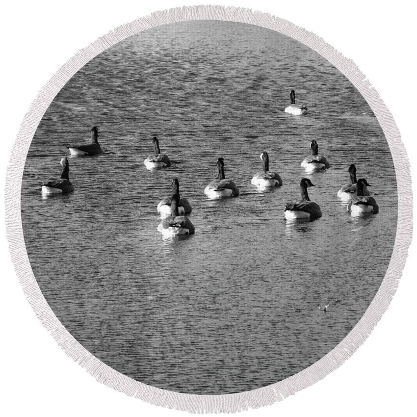 Animals Round Beach Towel featuring the photograph Wild Birds And Pond by Frank Romeo