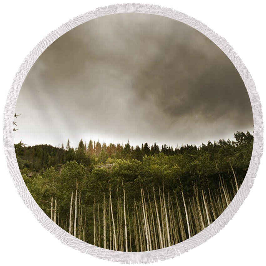 Vail Round Beach Towel featuring the photograph Aspen Trees In Vail by Madeline Ellis