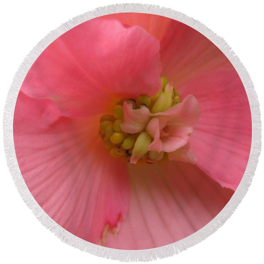 Begonia Round Beach Towel featuring the photograph Begonia Named Nonstop Pink by J McCombie