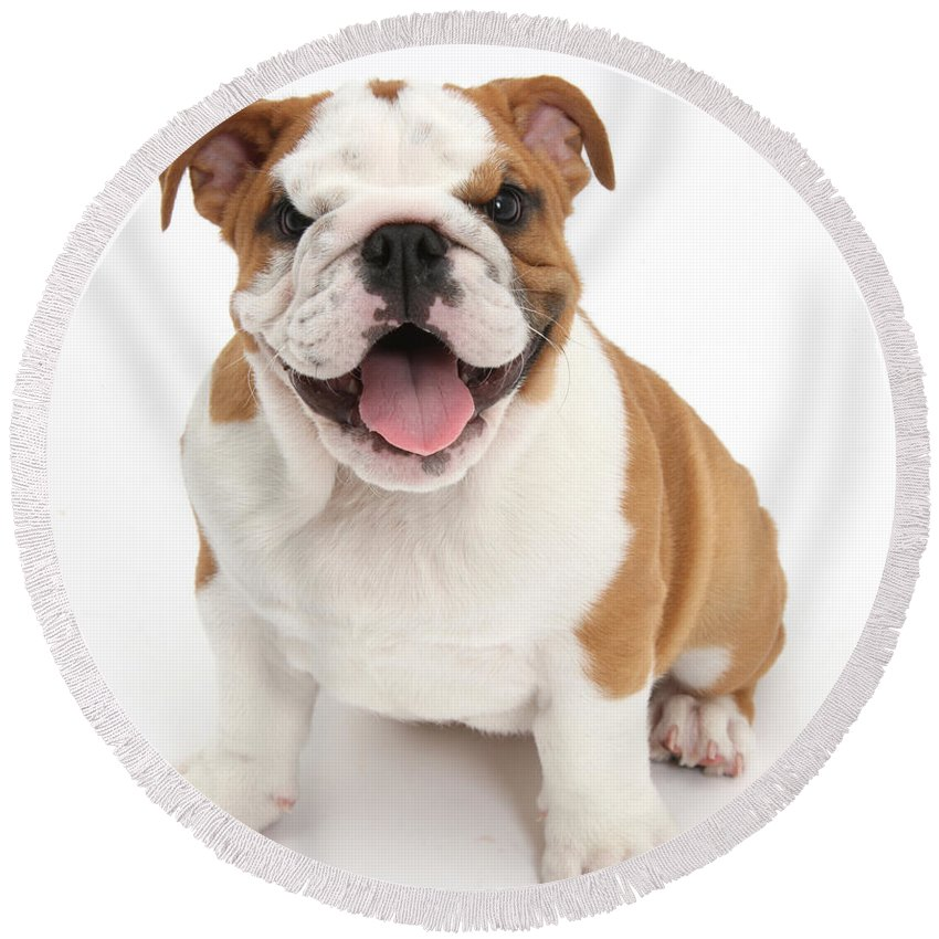 Nature Round Beach Towel featuring the photograph Bulldog Puppy by Mark Taylor