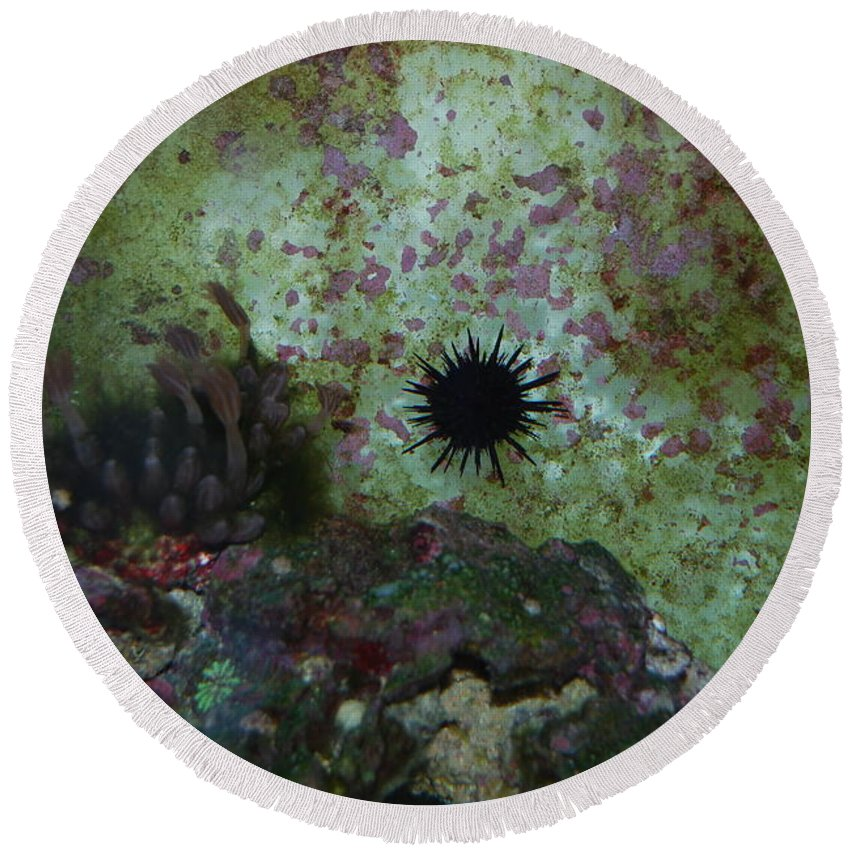 Taken Through Side Of Aquarium Round Beach Towel featuring the photograph Coral by Robert Floyd