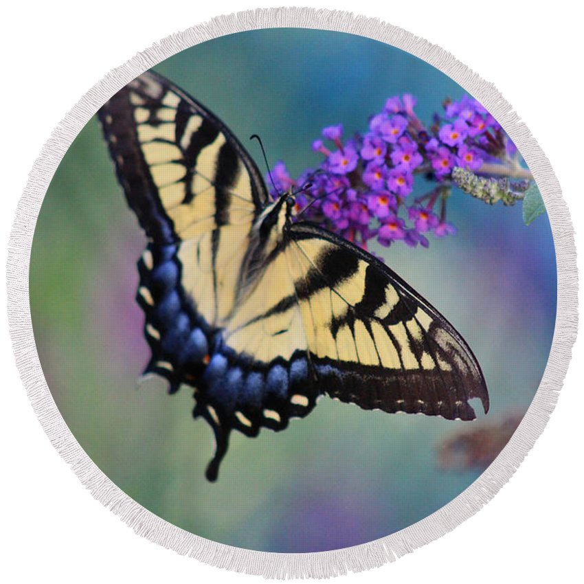 Butterfly Round Beach Towel featuring the photograph Eastern Tiger Swallowtail Butterfly On Butterfly Bush by Karen Adams