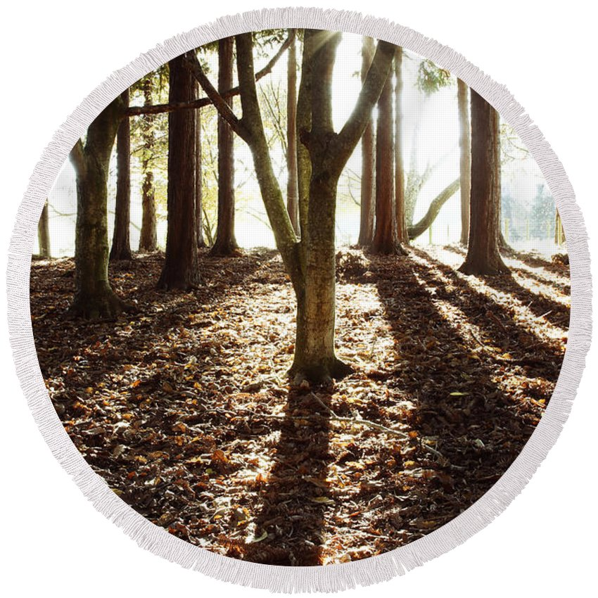 Autumn Round Beach Towel featuring the photograph Forest Sunlight by Les Cunliffe