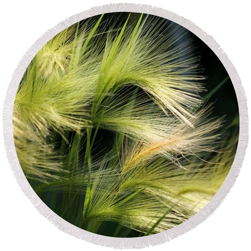 Mccombie Round Beach Towel featuring the photograph Hordeum Jubatum Grass by J McCombie