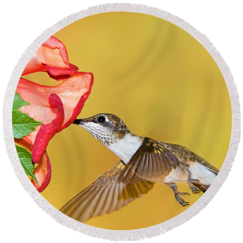 Nature Round Beach Towel featuring the photograph Ruby-throated Hummingbird Female by Millard H. Sharp