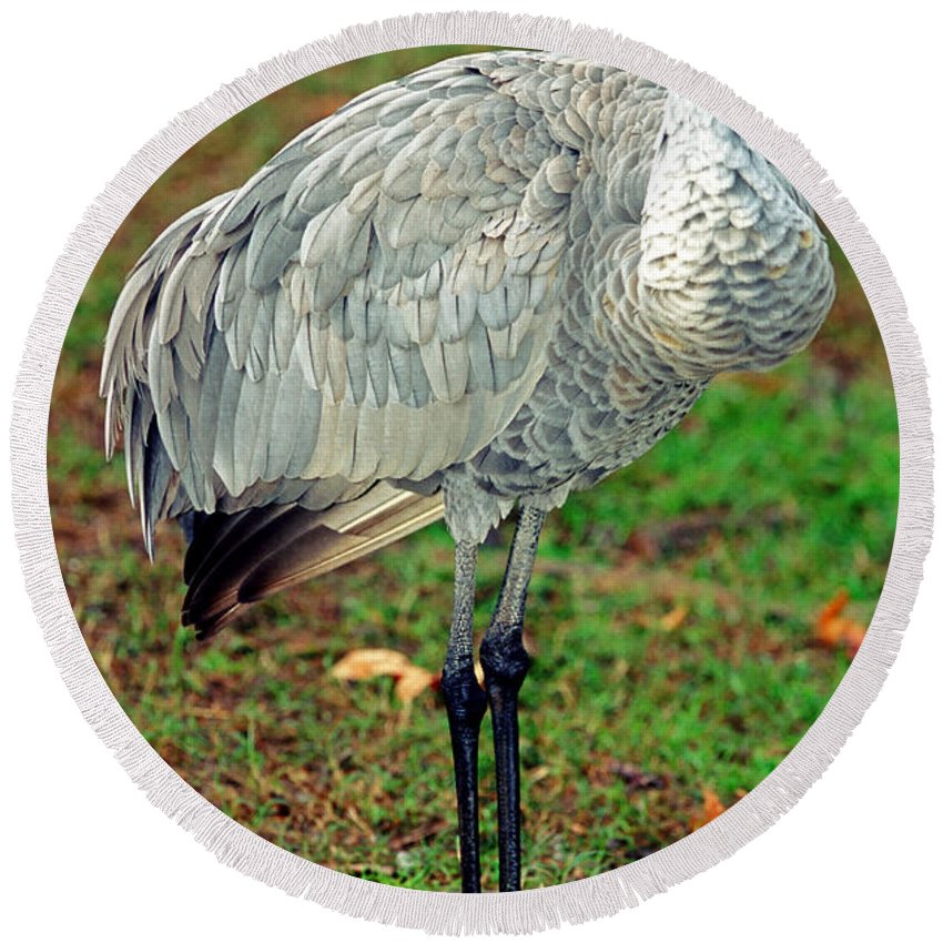 Nature Round Beach Towel featuring the photograph Sandhill Crane by Millard H. Sharp