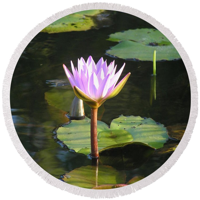 Waterlily Round Beach Towel featuring the photograph Pond Of Water Lily by Irina Davis