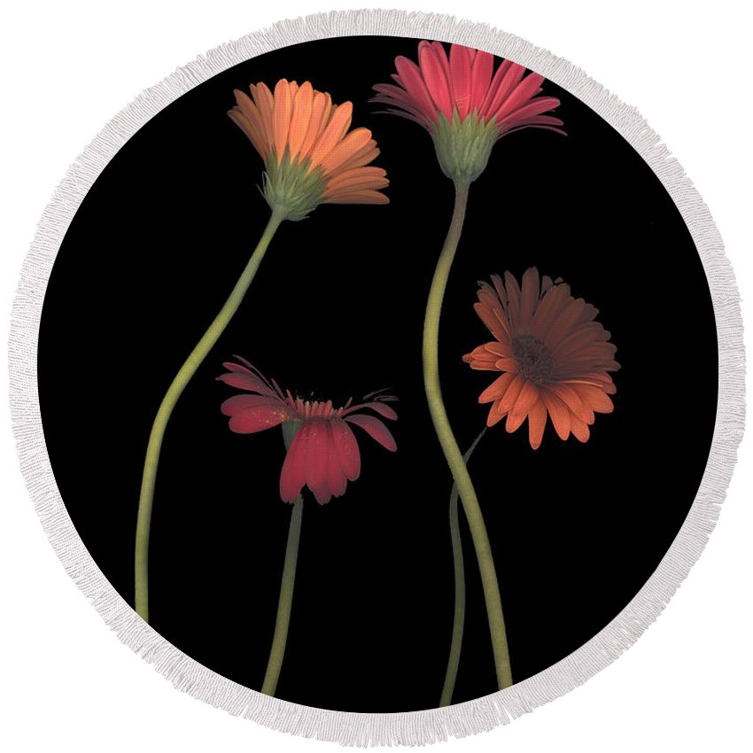 Black Round Beach Towel featuring the photograph 4daisies On Stems by Heather Kirk