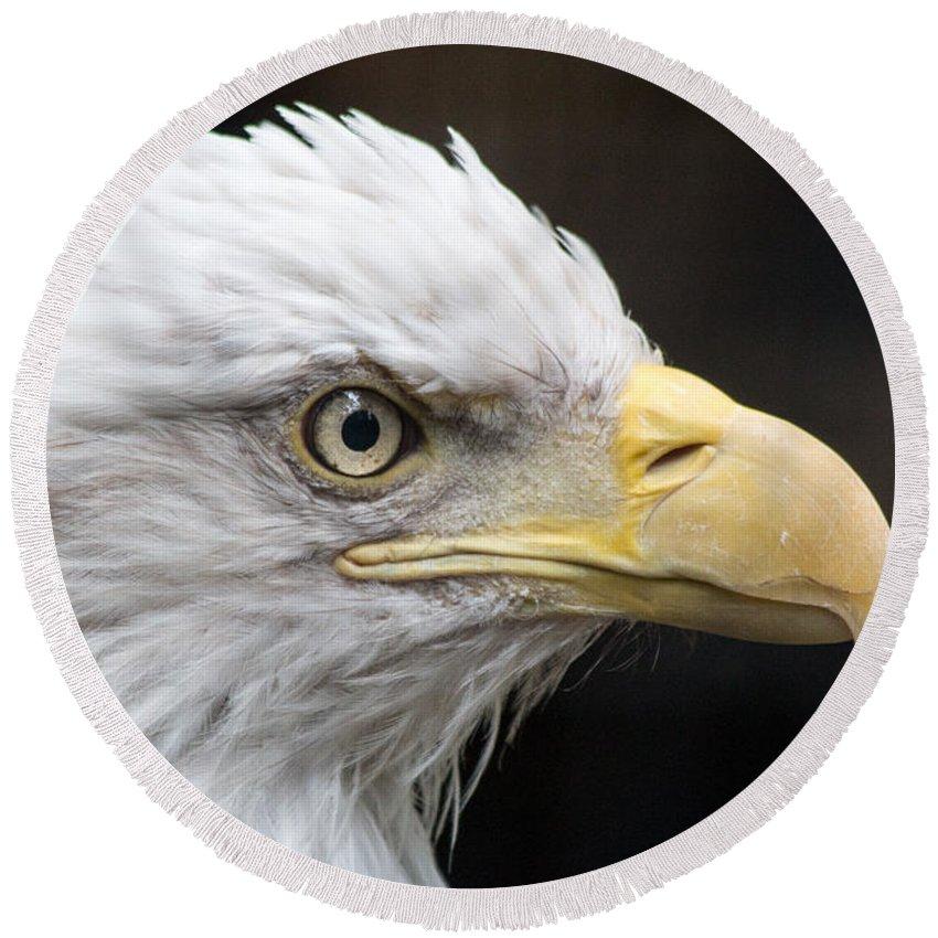 Bald Eagle Round Beach Towel featuring the photograph Bald Eagle by Gaurav Singh