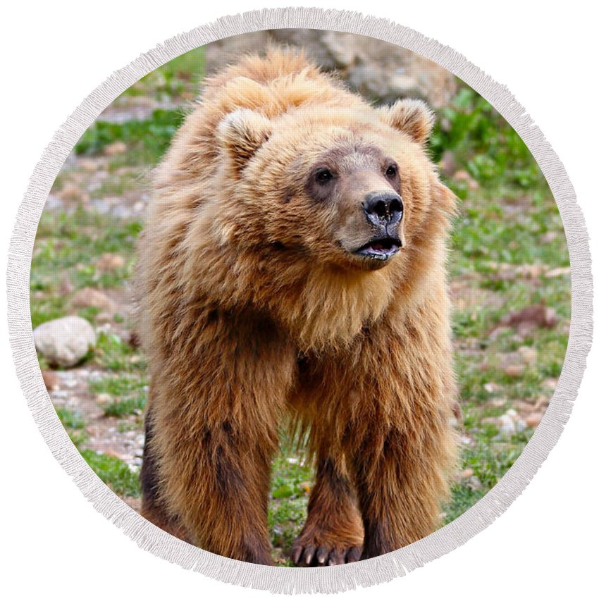 Animal Round Beach Towel featuring the photograph Brown Bear by Paul Fell
