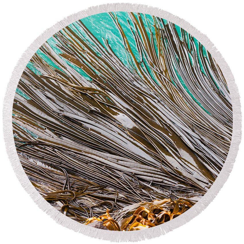 Abstract Round Beach Towel featuring the photograph Bull Kelp Blades On Surface Background Texture by Stephan Pietzko