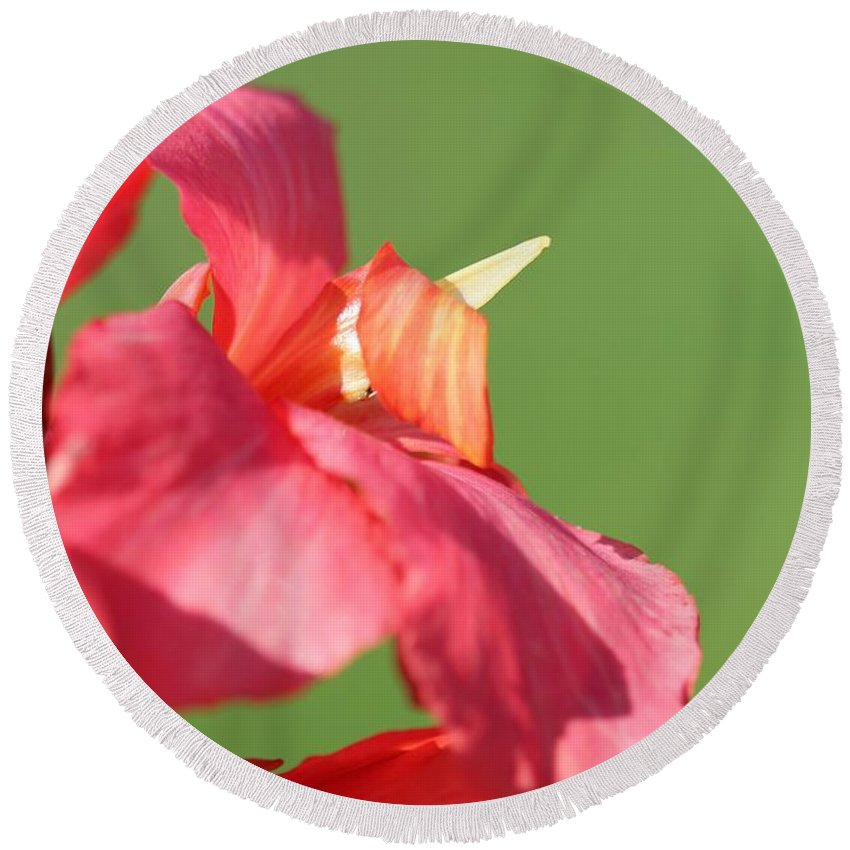 Canna Round Beach Towel featuring the photograph Dwarf Canna Lily Named Shining Pink by J McCombie