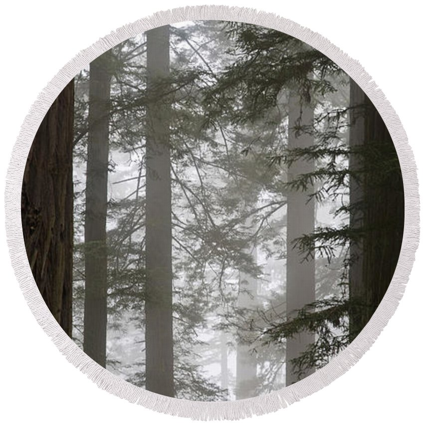 Plant Round Beach Towel featuring the photograph Foggy Coast Redwood Forest by Gregory G. Dimijian, M.D.