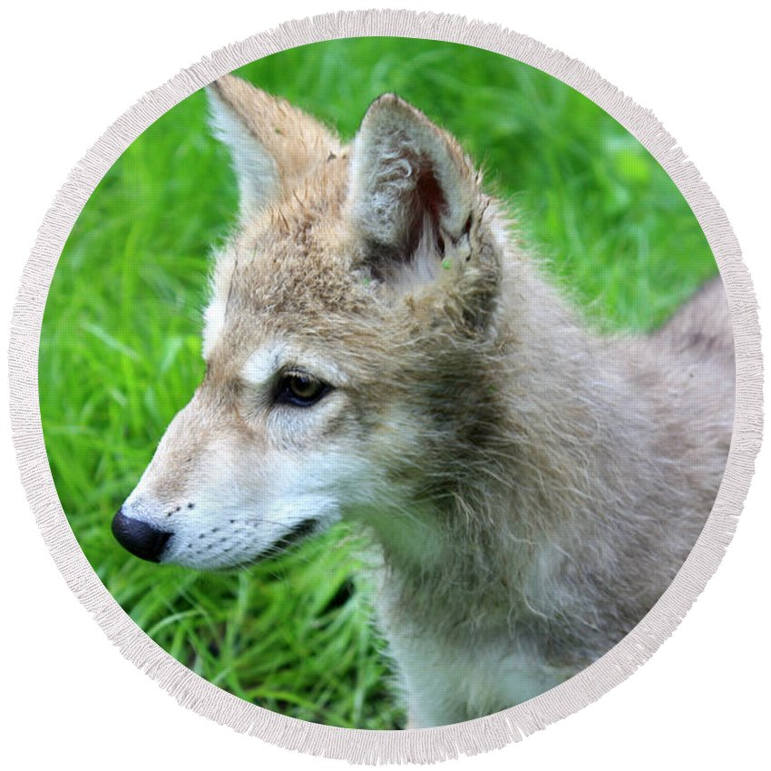 Designs Similar to Gray Wolf Pup