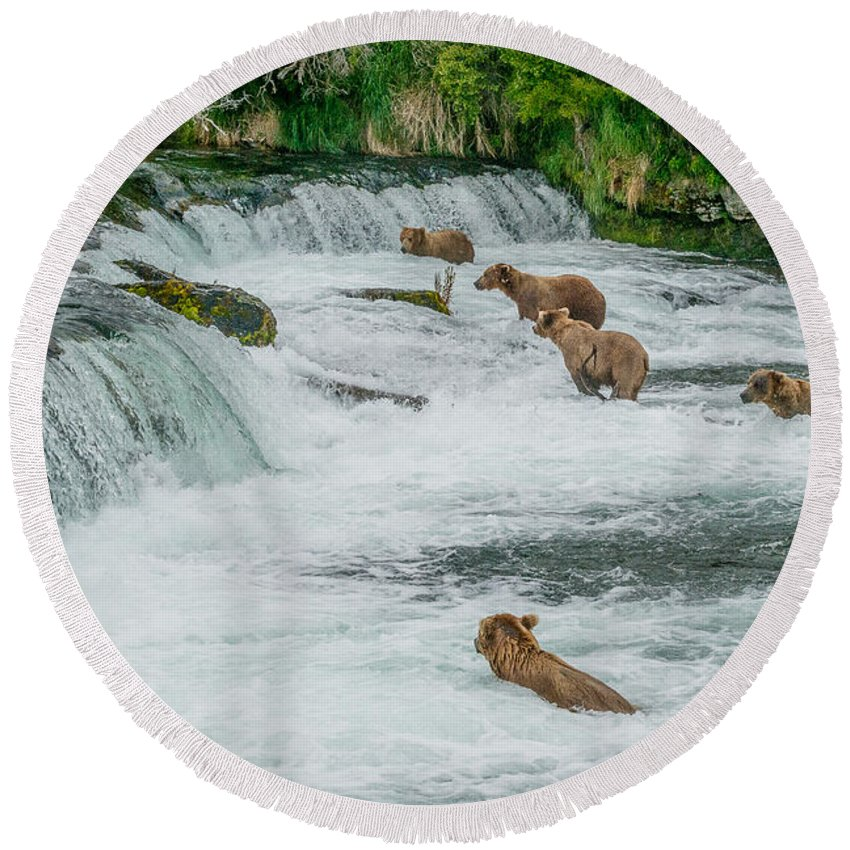Alaska Round Beach Towel featuring the photograph 5 Grizzlies by Joan Wallner