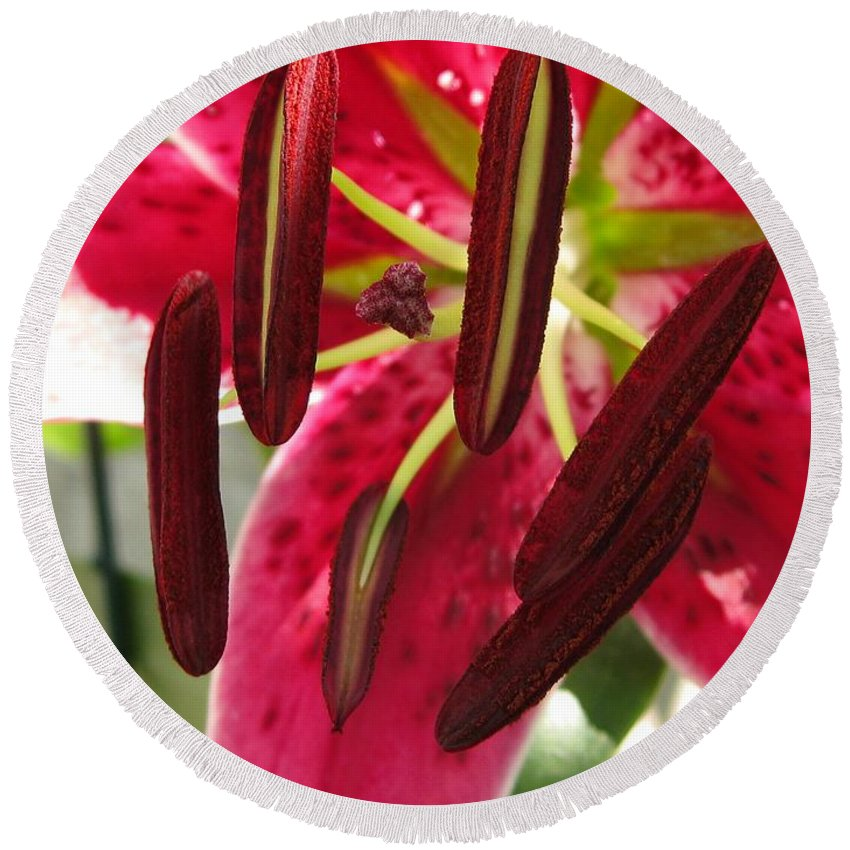 Orienpet Lily Round Beach Towel featuring the photograph Orienpet Lily Named Scarlet Delight by J McCombie