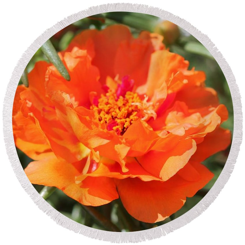 Mccombie Round Beach Towel featuring the photograph Portulaca Named Sundial Tangerine by J McCombie