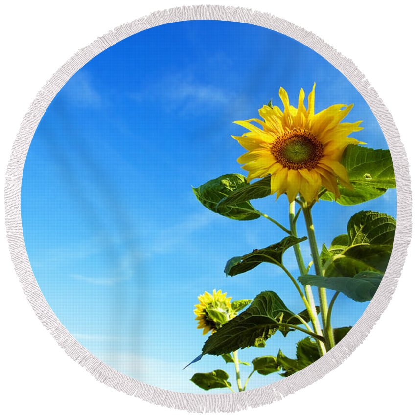 Sunflower Round Beach Towel featuring the photograph Sunflower by Michal Bednarek
