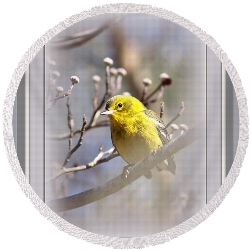 5393-006 Round Beach Towel featuring the photograph 5393-006 - Pine Warbler-fb by Travis Truelove