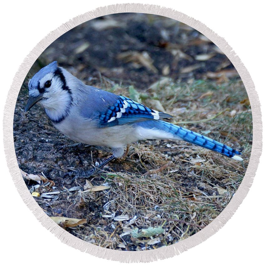 Birds Round Beach Towel featuring the photograph Blue Jay by Lori Tordsen