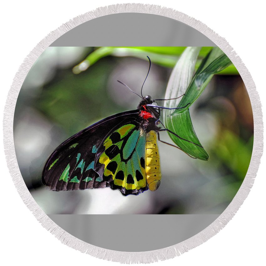 Butterfly Round Beach Towel featuring the photograph Butterfly by Savannah Gibbs