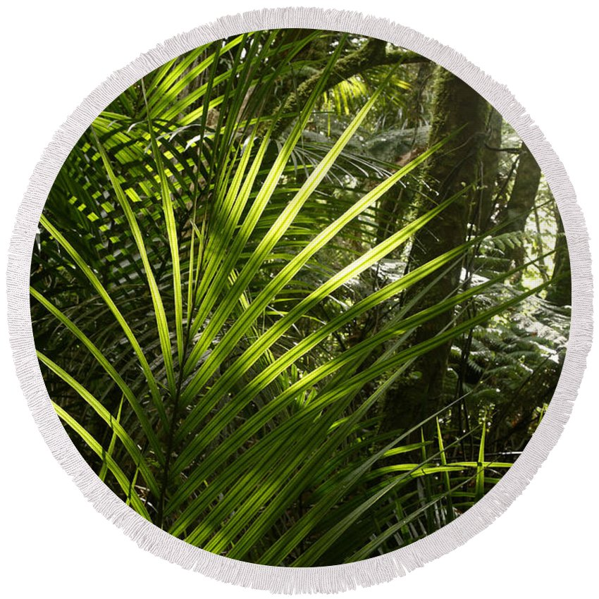 Rain Forest Round Beach Towel featuring the photograph Jungle Light by Les Cunliffe