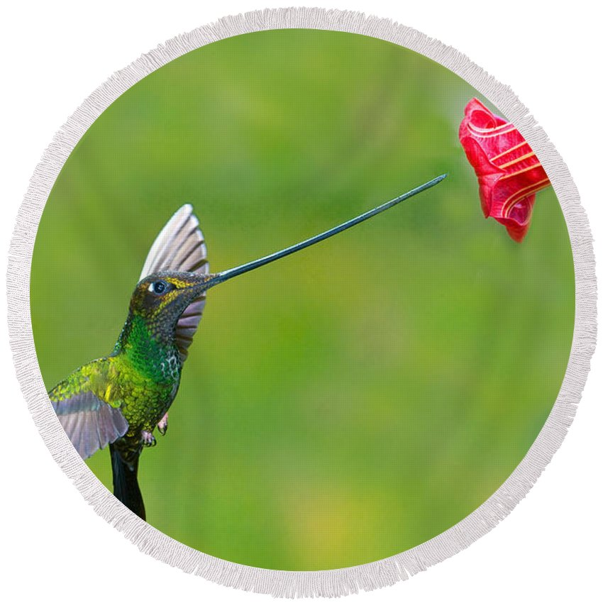 Animal Round Beach Towel featuring the photograph Sword-billed Hummingbird by Anthony Mercieca