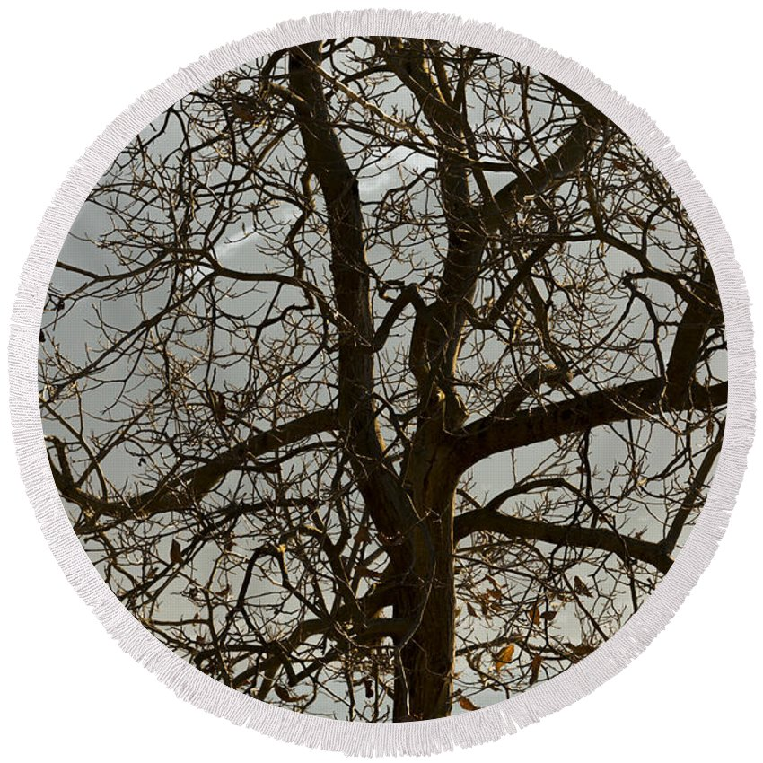 Tree Round Beach Towel featuring the photograph Tree by Mats Silvan