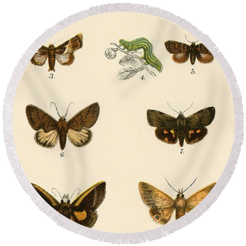 Insect Round Beach Towel featuring the painting Butterflies by English School