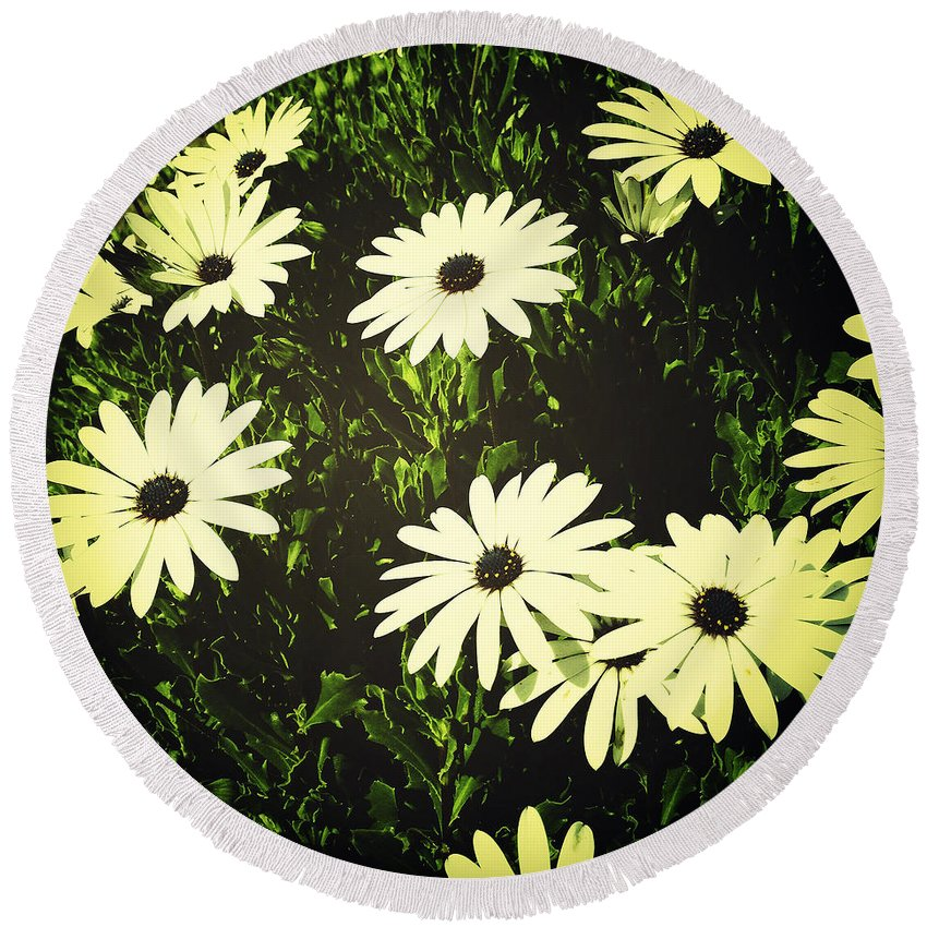 Bloom Round Beach Towel featuring the photograph Daisies by Les Cunliffe