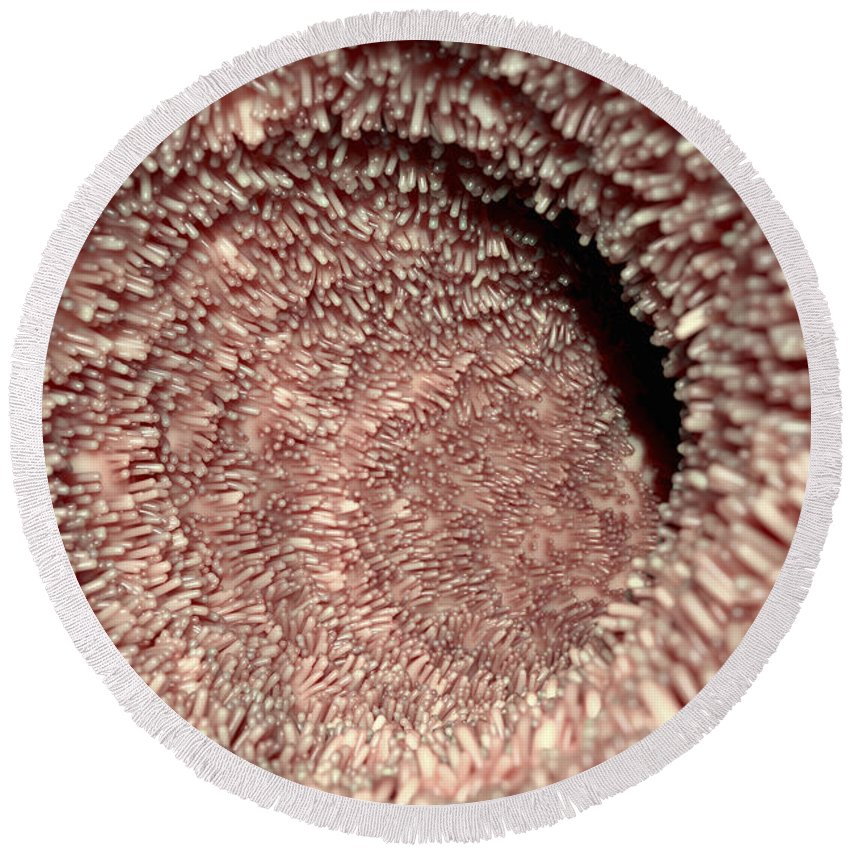 Intestinal Villi Round Beach Towel For Sale By Science Picture Co