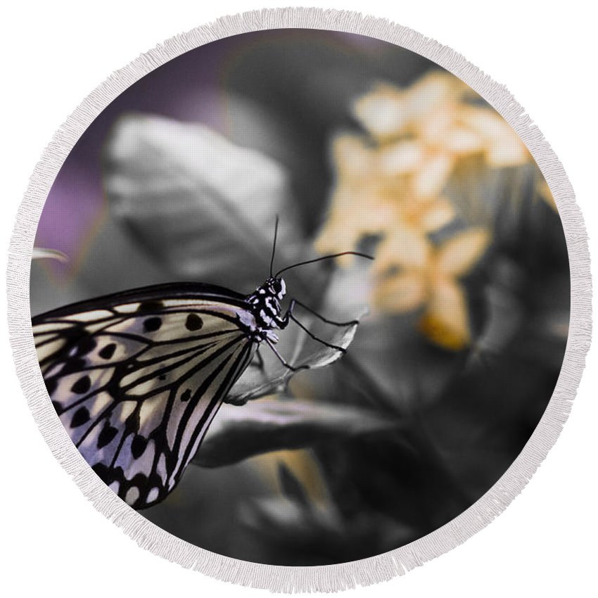 Butterfly Round Beach Towel featuring the photograph Butterfly by Bradley R Youngberg