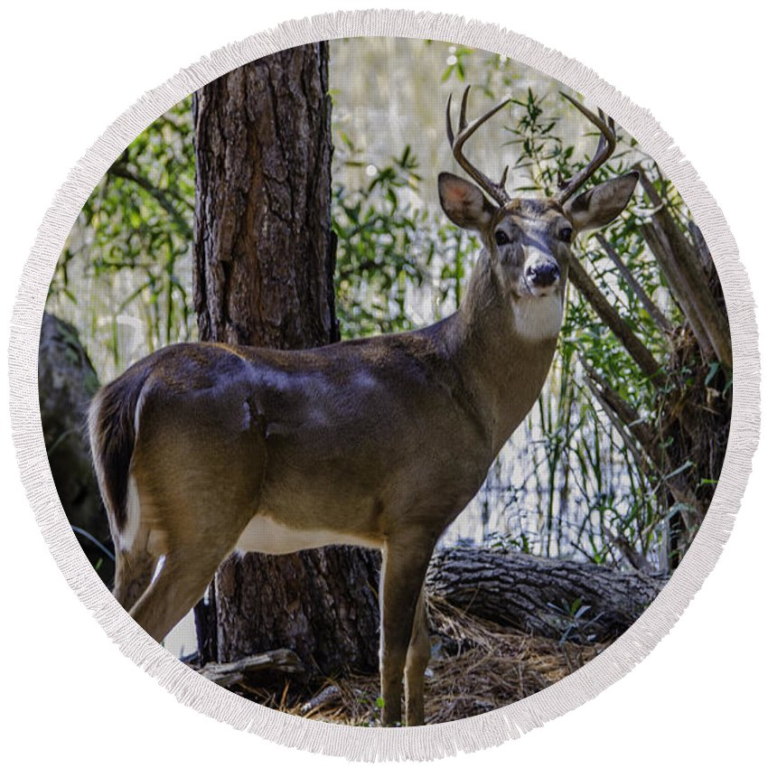 8 Point Buck Round Beach Towel featuring the photograph 8 Point Buck In My Backyard by Dale Powell