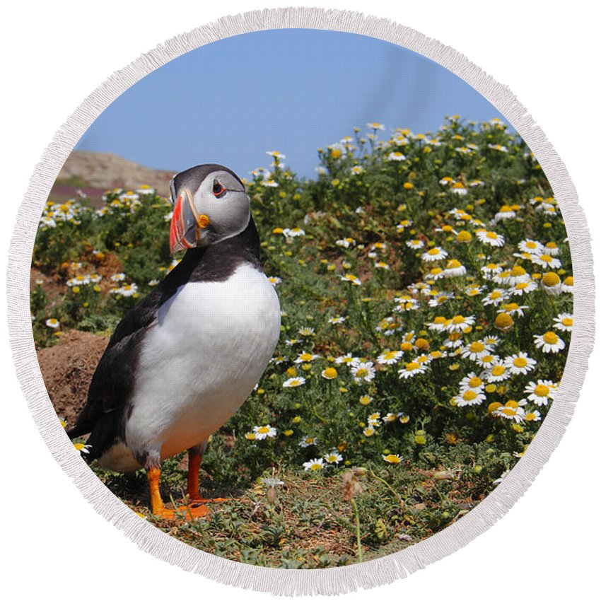 Puffin Round Beach Towel featuring the photograph Puffin by Traci Law