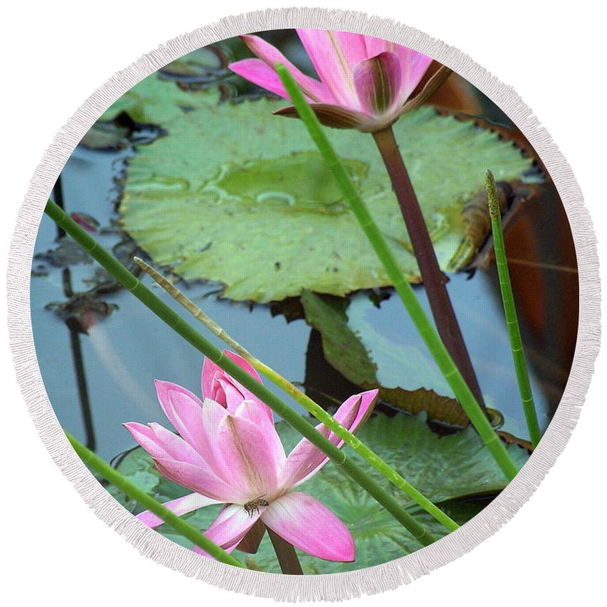 Waterlily Round Beach Towel featuring the photograph Pink Water Lily Pond by Irina Davis